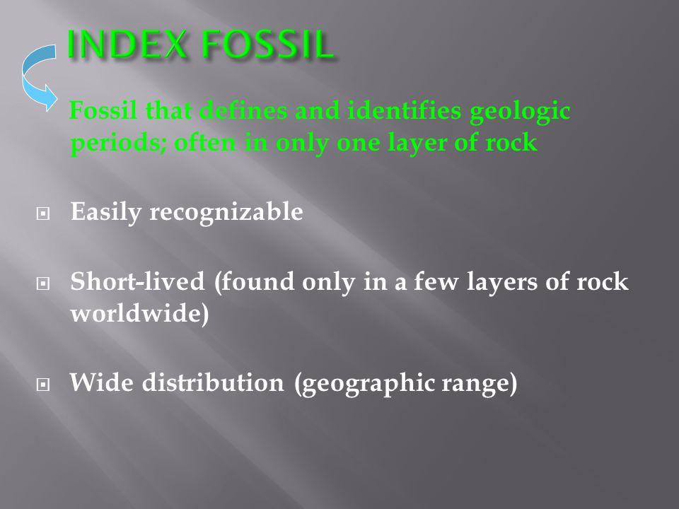 Petrified Wood Dinosaur Tracks Impressions Carbon Film Amber Casts