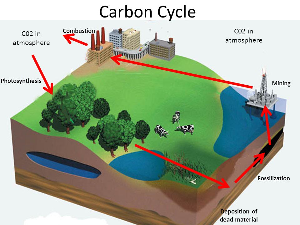 Carbon Cycle C02 in atmosphere Photosynthesis C02 in atmosphere Deposition of dead material Fossilization Mining Combustion