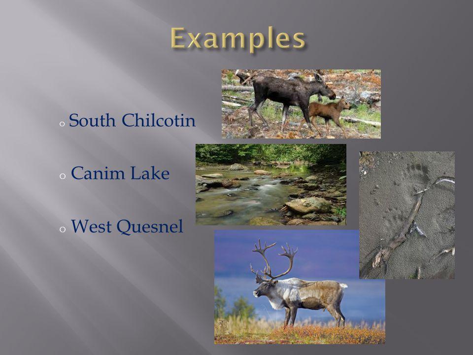 o South Chilcotin o Canim Lake o West Quesnel