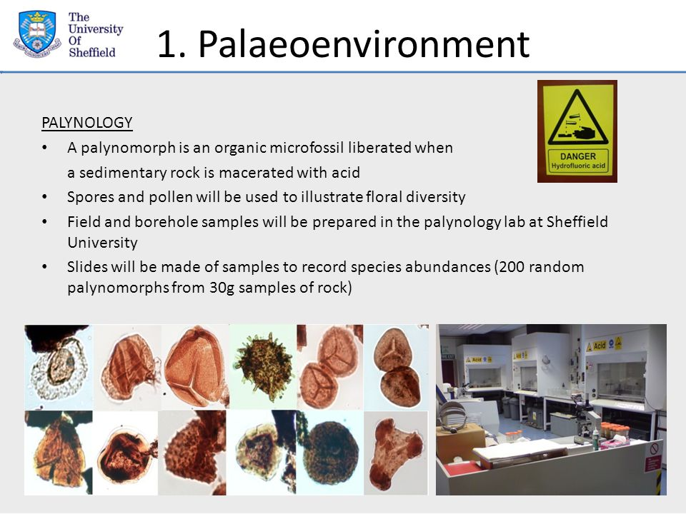 1. Palaeoenvironment PALYNOLOGY A palynomorph is an organic microfossil liberated when a sedimentary rock is macerated with acid Spores and pollen wil
