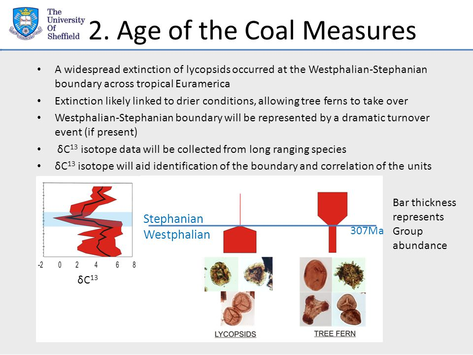 2. Age of the Coal Measures A widespread extinction of lycopsids occurred at the Westphalian-Stephanian boundary across tropical Euramerica Extinction