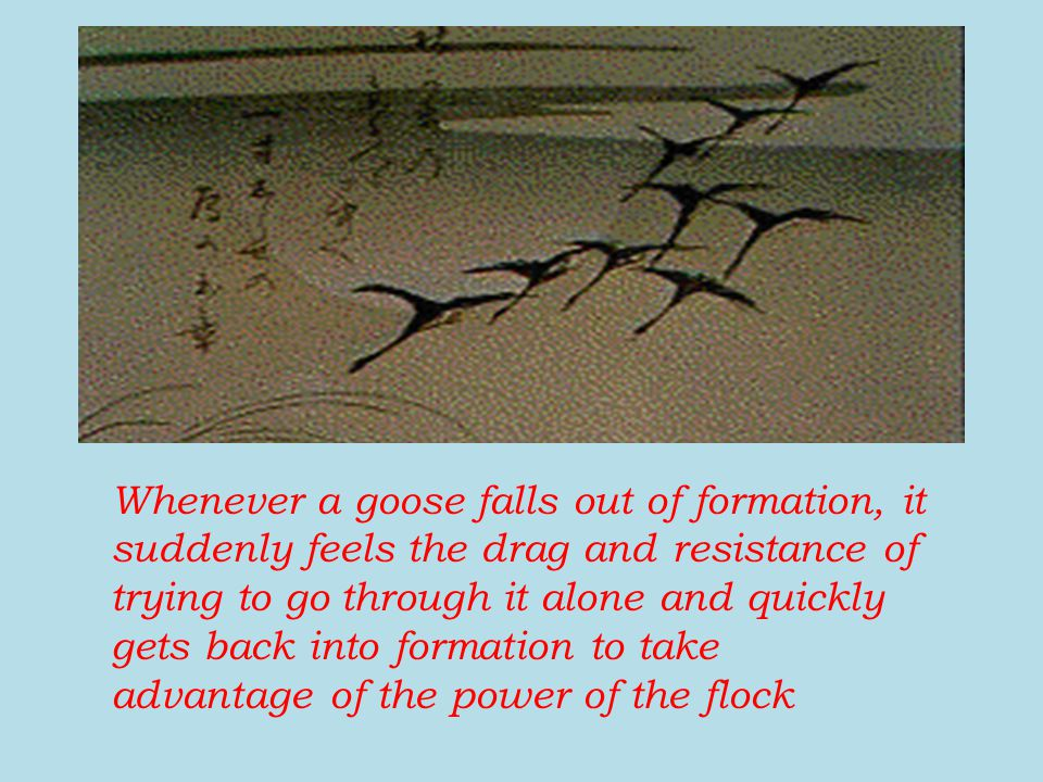 Whenever a goose falls out of formation, it suddenly feels the drag and resistance of trying to go through it alone and quickly gets back into formati
