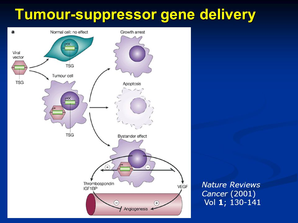 Tumour-suppressor gene delivery Nature Reviews Cancer (2001) Vol 1; 130-141