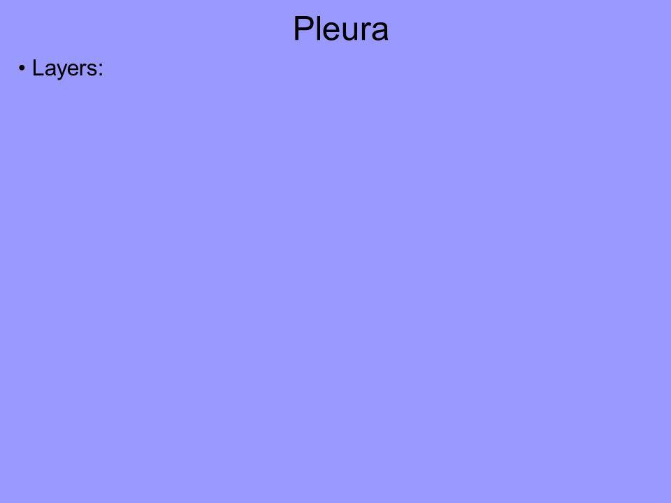Pleura Layers: