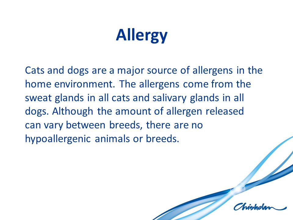 Allergy Cats and dogs are a major source of allergens in the home environment. The allergens come from the sweat glands in all cats and salivary gland