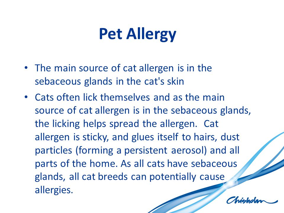 Pet Allergy The main source of cat allergen is in the sebaceous glands in the cat's skin Cats often lick themselves and as the main source of cat alle