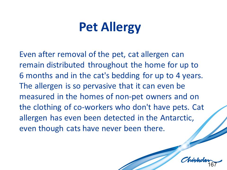 Pet Allergy Even after removal of the pet, cat allergen can remain distributed throughout the home for up to 6 months and in the cat's bedding for up