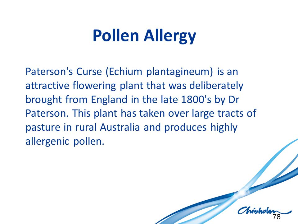 Pollen Allergy Paterson's Curse (Echium plantagineum) is an attractive flowering plant that was deliberately brought from England in the late 1800's b