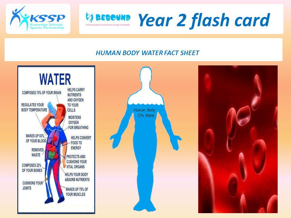 Year 2 flash card HUMAN BODY WATER FACT SHEET
