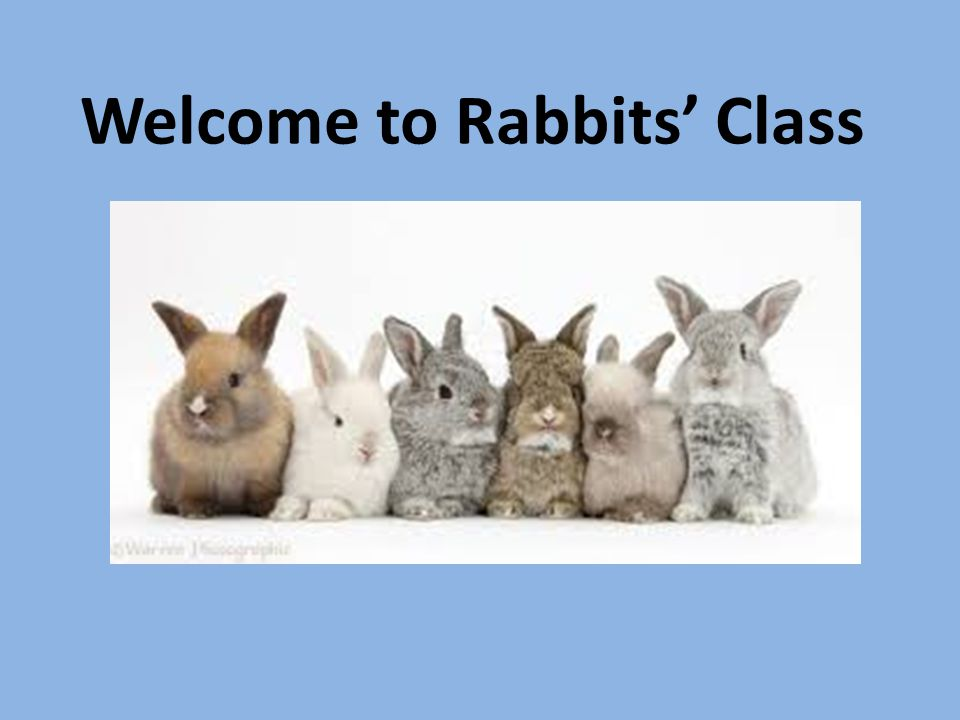 Welcome to Rabbits' Class