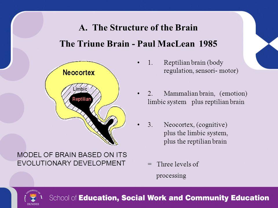 A. The Structure of the Brain The Triune Brain - Paul MacLean 1985 1.Reptilian brain (body regulation, sensori- motor) 2. Mammalian brain, (emotion) l