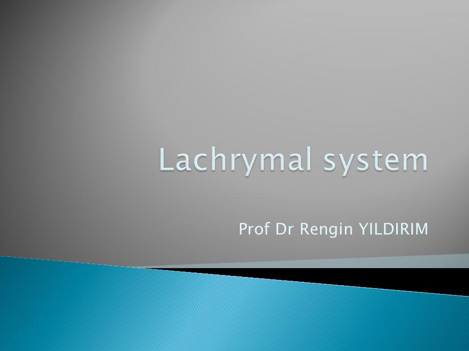 Prof Dr Rengin YILDIRIM