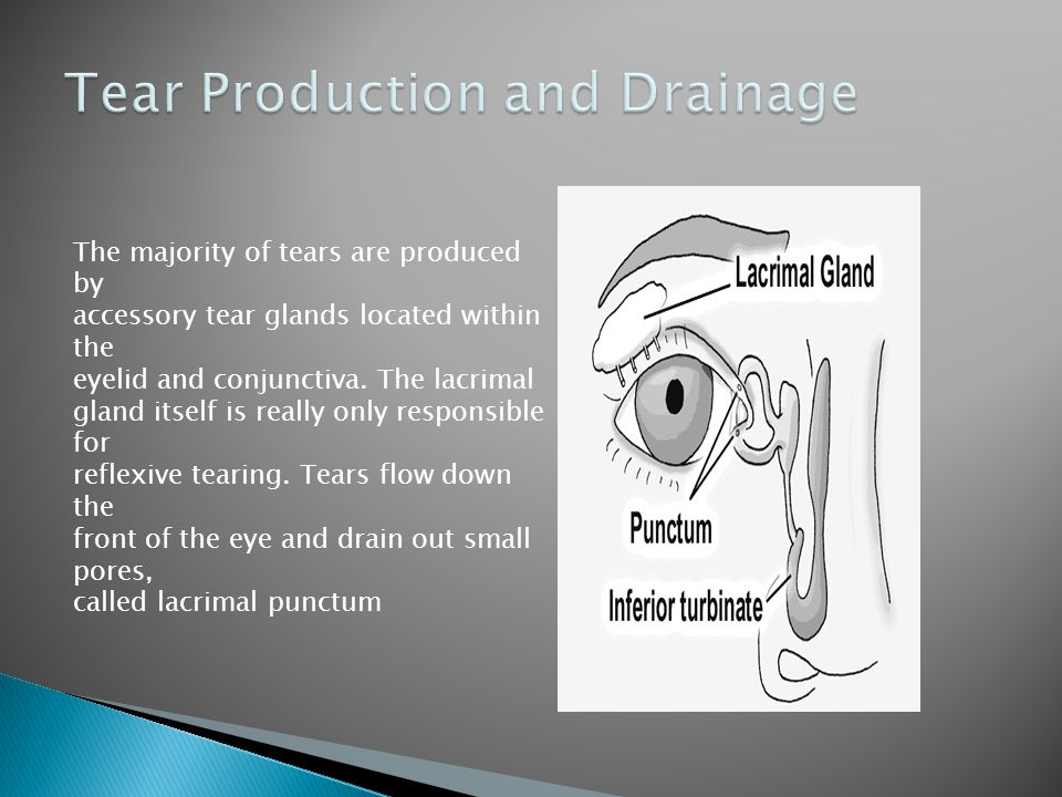 The majority of tears are produced by accessory tear glands located within the eyelid and conjunctiva.