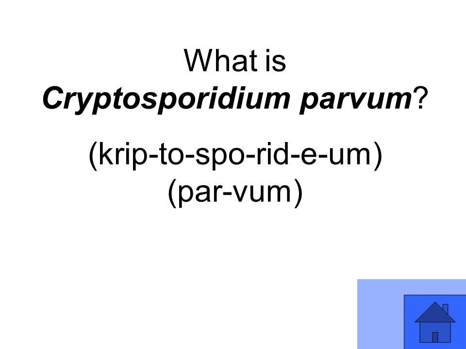 What is Cryptosporidium parvum? (krip-to-spo-rid-e-um) (par-vum)
