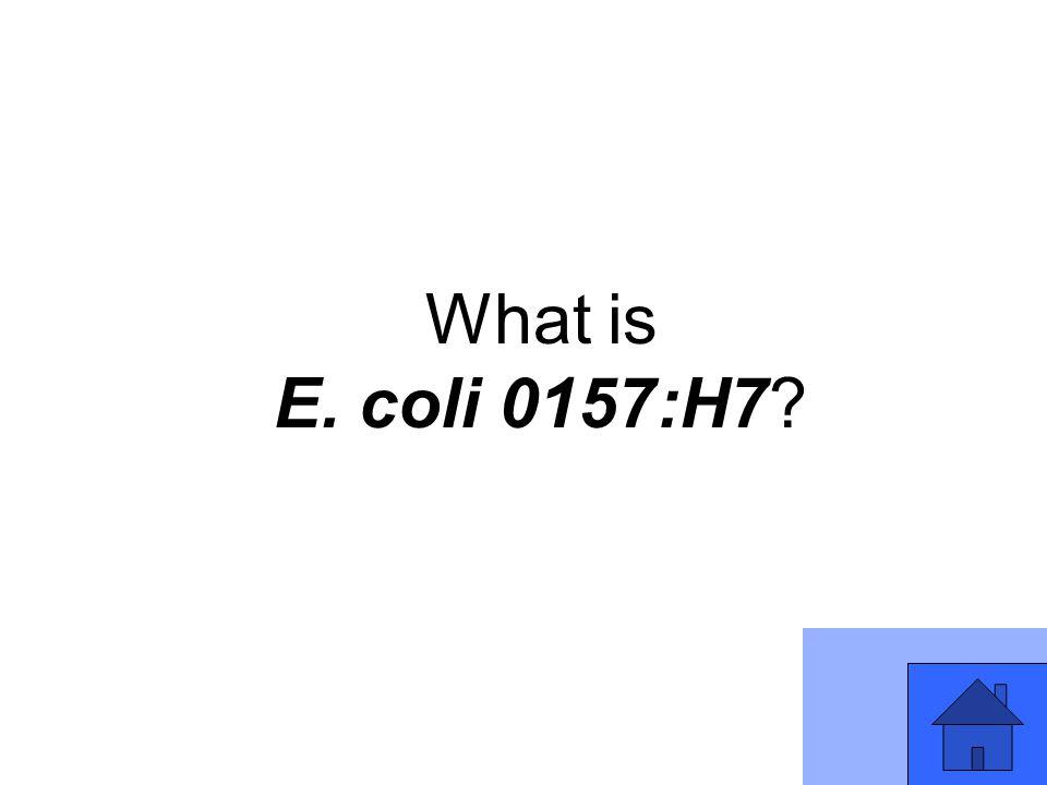 What is E. coli 0157:H7?
