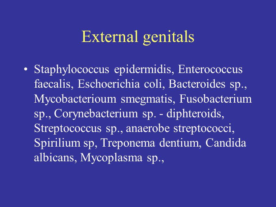 External genitals Staphylococcus epidermidis, Enterococcus faecalis, Eschoerichia coli, Bacteroides sp., Mycobacterioum smegmatis, Fusobacterium sp., Corynebacterium sp.