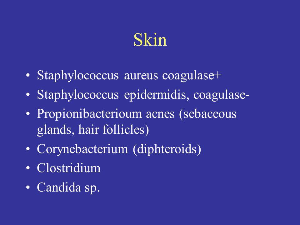 Skin Staphylococcus aureus coagulase+ Staphylococcus epidermidis, coagulase- Propionibacterioum acnes (sebaceous glands, hair follicles) Corynebacterium (diphteroids) Clostridium Candida sp.