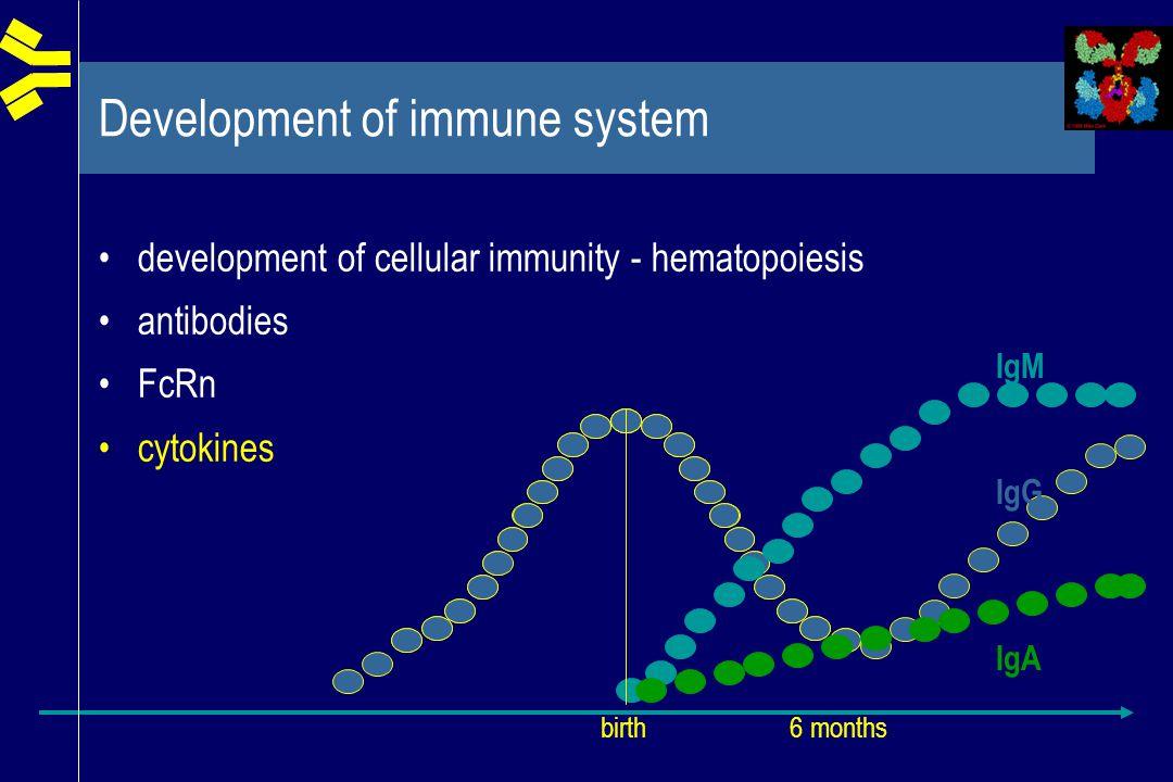 Development of immune system development of cellular immunity - hematopoiesis antibodies FcRn cytokines IgM IgG IgA birth 6 months