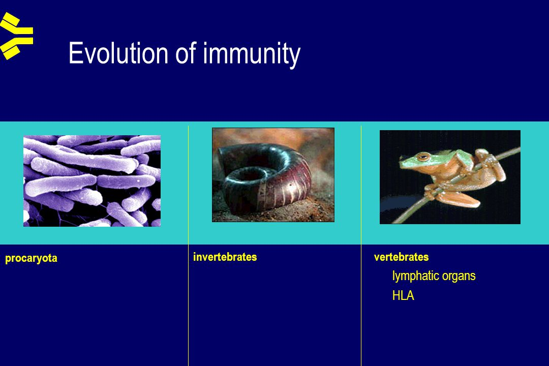 Secondary immunodeficiencies