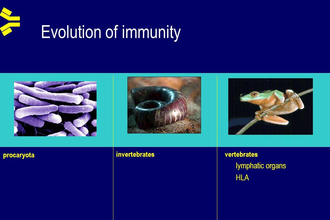 Evolution of immunity procaryota vertebrates lymphatic organs HLA invertebrates