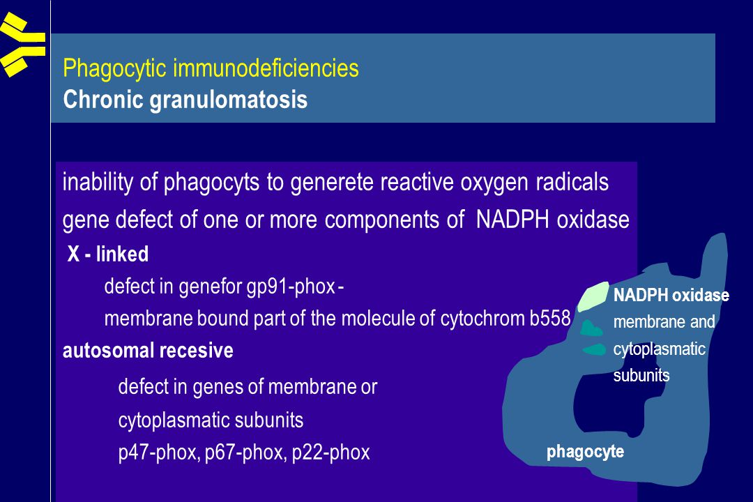 Phagocytic immunodeficiencies Chronic granulomatosis inability of phagocyts to generete reactive oxygen radicals gene defect of one or more components of NADPH oxidase X - linked defect in genefor gp91-phox - membrane bound part of the molecule of cytochrom b558 autosomal recesive defect in genes of membrane or cytoplasmatic subunits p47-phox, p67-phox, p22-phox phagocyte NADPH oxidase membrane and cytoplasmatic subunits