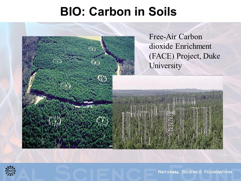 BIO: Carbon in Soils Free-Air Carbon dioxide Enrichment (FACE) Project, Duke University