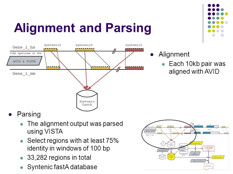 Alignment and Parsing Parsing The alignment output was parsed using VISTA Select regions with at least 75% identity in windows of 100 bp 33,282 regions in total Syntenic fastA database Alignment Each 10kb pair was aligned with AVID