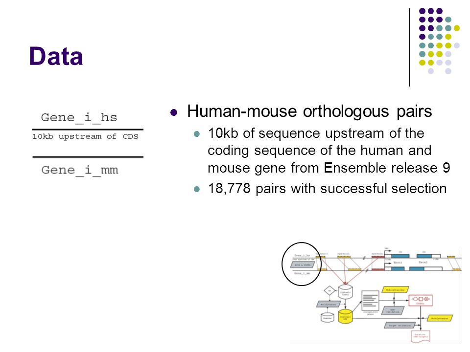 Data Human-mouse orthologous pairs 10kb of sequence upstream of the coding sequence of the human and mouse gene from Ensemble release 9 18,778 pairs with successful selection