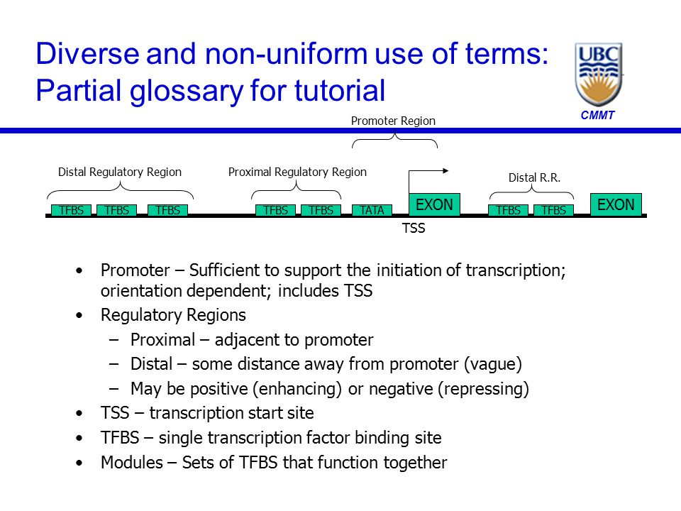 CMMT Diverse and non-uniform use of terms: Partial glossary for tutorial Promoter – Sufficient to support the initiation of transcription; orientation