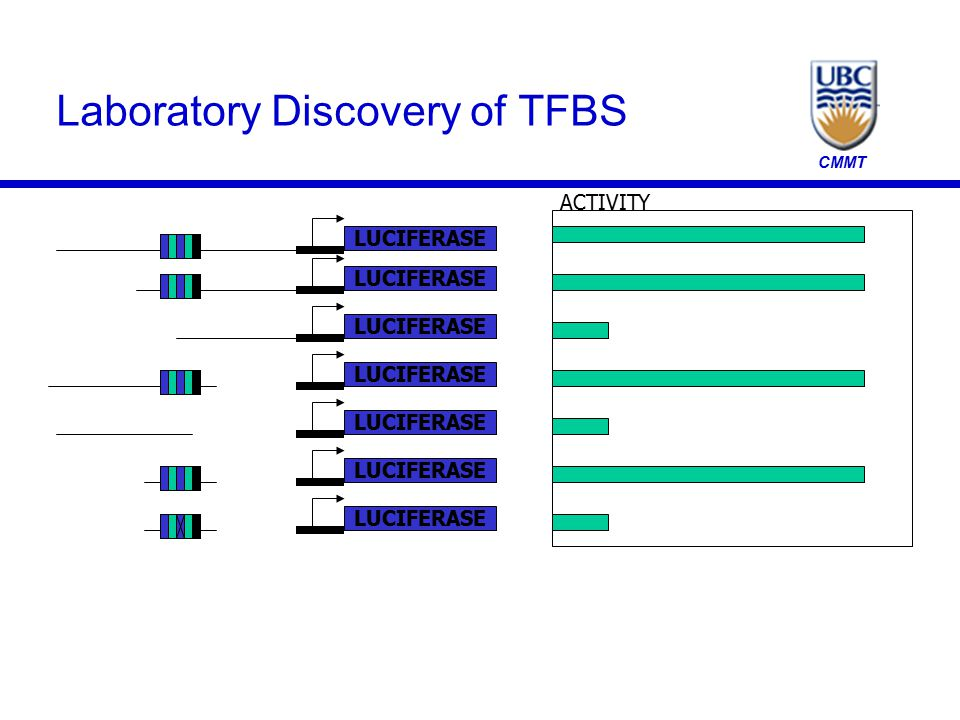 CMMT Laboratory Discovery of TFBS LUCIFERASE ACTIVITY