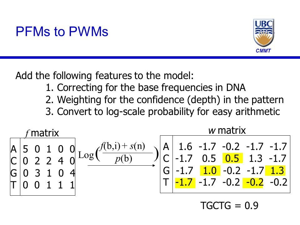 CMMT TGCTG = 0.9 PFMs to PWMs Add the following features to the model: 1. Correcting for the base frequencies in DNA 2. Weighting for the confidence (