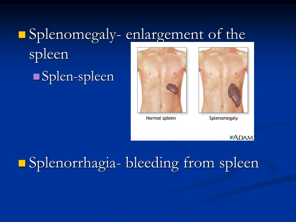 Splenomegaly- enlargement of the spleen Splenomegaly- enlargement of the spleen Splen-spleen Splen-spleen Splenorrhagia- bleeding from spleen Splenorrhagia- bleeding from spleen