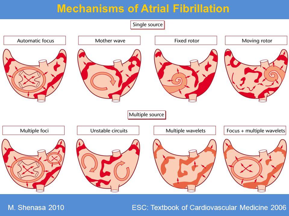 Mechanisms of Atrial Fibrillation ESC: Textbook of Cardiovascular Medicine 2006M. Shenasa 2010