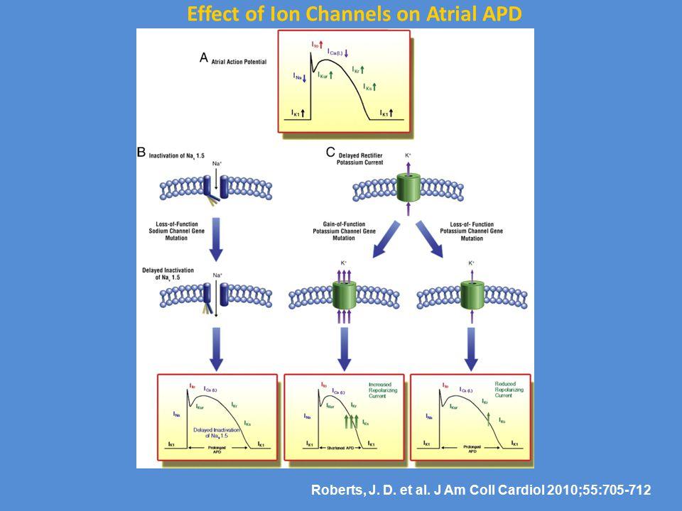 Roberts, J. D. et al. J Am Coll Cardiol 2010;55:705-712 Effect of Ion Channels on Atrial APD