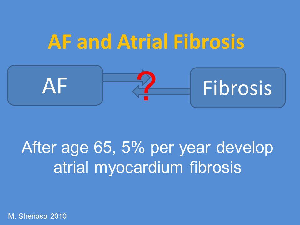 AF and Atrial Fibrosis AF Fibrosis .