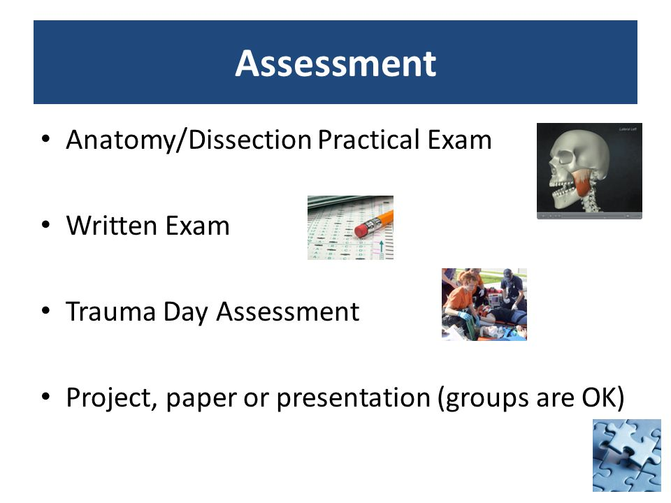 Assessment Anatomy/Dissection Practical Exam Written Exam Trauma Day Assessment Project, paper or presentation (groups are OK)