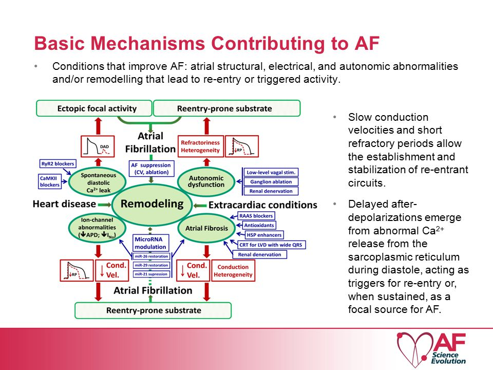 Basic Mechanisms Contributing to AF Conditions that improve AF: atrial structural, electrical, and autonomic abnormalities and/or remodelling that lead to re-entry or triggered activity.