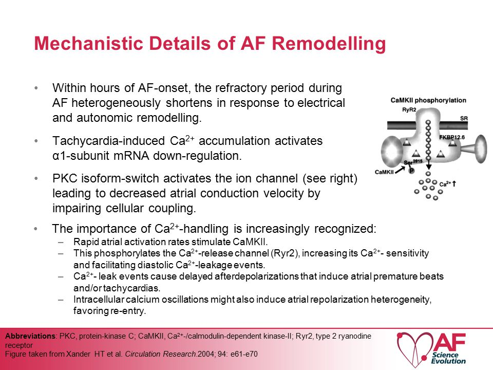 Mechanistic Details of AF Remodelling Within hours of AF-onset, the refractory period during AF heterogeneously shortens in response to electrical and autonomic remodelling.