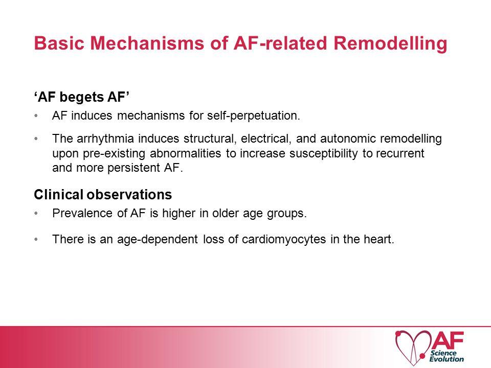 Basic Mechanisms of AF-related Remodelling 'AF begets AF' AF induces mechanisms for self-perpetuation.