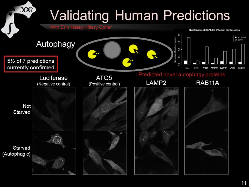 Validating Human Predictions 11 Autophagy Luciferase (Negative control) ATG5 (Positive control) LAMP2RAB11A Not Starved (Autophagic) Predicted novel autophagy proteins 5½ of 7 predictions currently confirmed With Erin Haley, Hilary Coller