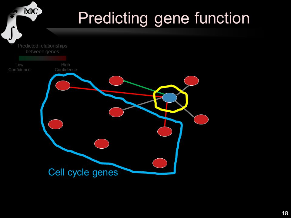 Predicting gene function 18 Predicted relationships between genes High Confidence Low Confidence Cell cycle genes