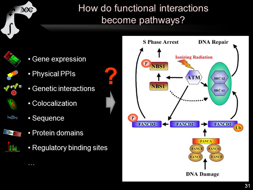 Gene expression Physical PPIs Genetic interactions Colocalization Sequence Protein domains Regulatory binding sites … .