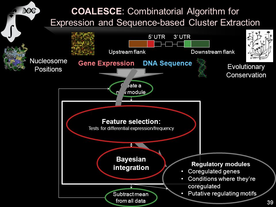 COALESCE: Combinatorial Algorithm for Expression and Sequence-based Cluster Extraction 39 Gene ExpressionDNA Sequence 5' UTR 3' UTR Upstream flankDownstream flank Evolutionary Conservation Nucleosome Positions Identify conditions where genes coexpress Identify motifs enriched in genes' sequences Create a new module Select genes based on conditions and motifs Subtract mean from all data Regulatory modules Coregulated genes Conditions where they're coregulated Putative regulating motifs Feature selection: Tests for differential expression/frequency Bayesian integration