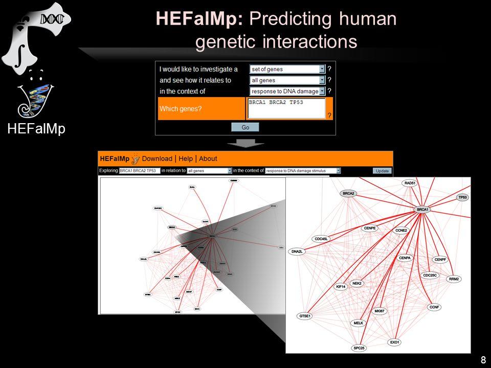 HEFalMp: Predicting human genetic interactions 8 HEFalMp
