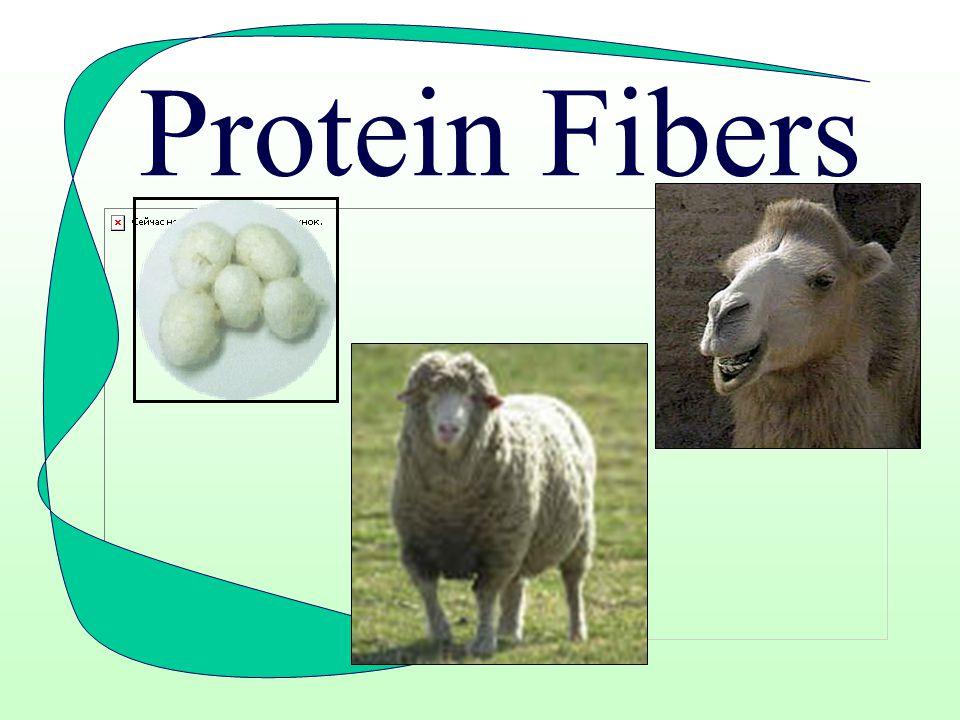 Natural Fibers Sources: –Animals –Plants