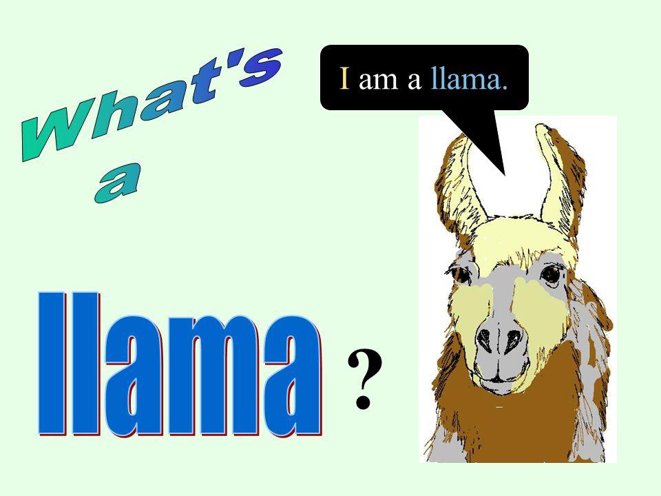 I am a llama.