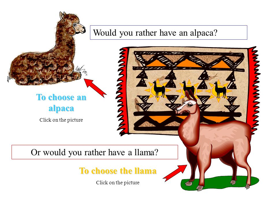 Would you rather have an alpaca. Or would you rather have a llama.