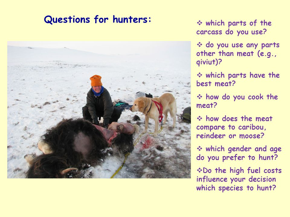 Questions for hunters:  which parts of the carcass do you use.