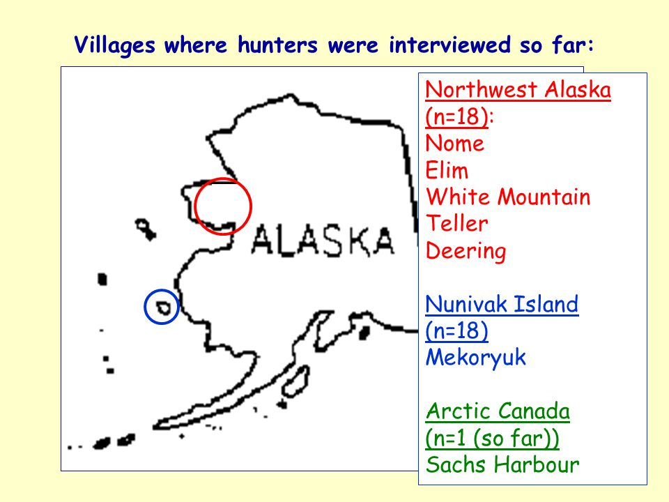 Villages where hunters were interviewed so far: Northwest Alaska (n=18): Nome Elim White Mountain Teller Deering Nunivak Island (n=18) Mekoryuk Arctic Canada (n=1 (so far)) Sachs Harbour