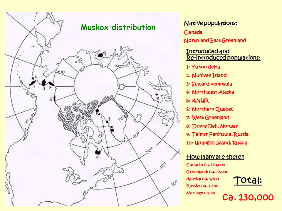 Muskox distribution Native populations: Canada North and East Greenland Introduced and Re-introduced populations: 1: Yukon delta 2: Nunivak Island 3: Seward peninsula 4: Northwest Alaska 5: ANWR 6: Northern Quebec 7: West Greenland 8: Dovre Fjell, Norway 9: Taimyr Peninsula, Russia 10: Wrangell Island, Russia How many are there .